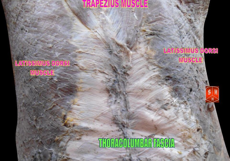 The Fascinating Fascia